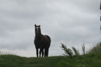 Záhadný kůň u Minard Castle